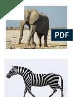 Animals in Safari Park