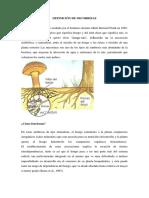 Definición de Micorrizas y Alelopatia