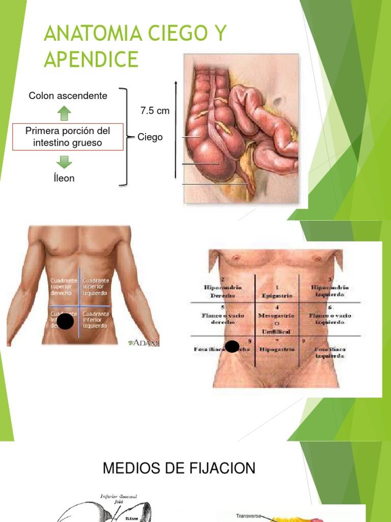 Anatomia Ciego y Apendice