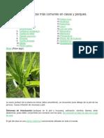22 Plantas Tóxicas Más Comunes en Casas y Parques