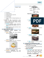 Fungi Bio2 5