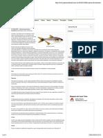 A pesca de lambari | Pescaria Brasil