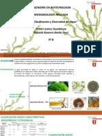 Algas. Clasificación y Diversidad