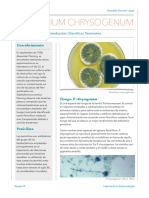 Penicillium Chriysogenum