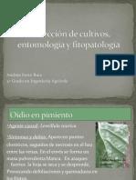 fichas Protección de Cultivos, Entomología y Fitopatología