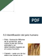 Identificacion de Cabellos Humanos