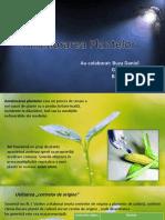 Ameliorarea plantelor