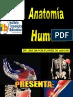 Morfo I Anatomia (1)