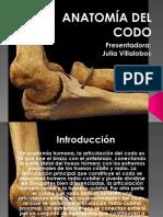 Anatomía Del Codo