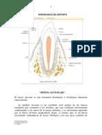 Hueso Alveolar