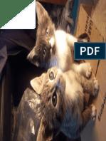 Gatos bebes
