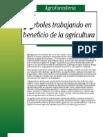 Agricultura Ecologica - Agroforestería