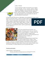 Departamentos de Guatemala Flora Fauna