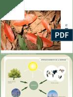 Biomasa Limpio