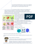 INFLAMACIÓN CRÓNICA.pdf