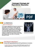 Afección Patología Fisiología Del Aparato Reproductor Masculino