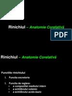 Curs 1. Anatomia renala oct 2016.ppt