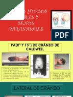 Cráneo ,huesos faciales y senos paranasales.pptx