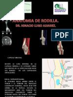 ANATOMIA DE RODILLA.pptx