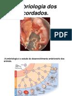 Embriologia Dos Cordados