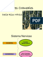 pares-craneales.ppt