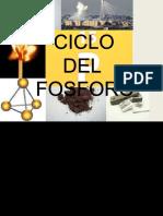325449747-Ciclo-del-fosforo-pptx.pptx