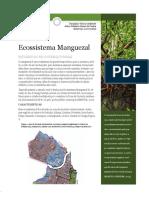 ecossistema_manguezal