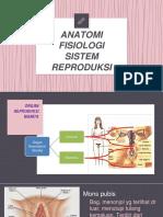 KBA (Anatomi fisiologi Sistem Reproduksi)