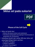 2.Siklus Sel Pada Eukariot