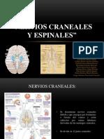 Nervios Craneales y Espinales