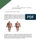 Tarea I Anatomia
