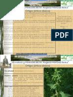 251+Ortiga.pdf