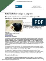 Chagas en Perro