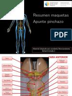 Neuroanatomia Pinchazo 1-1
