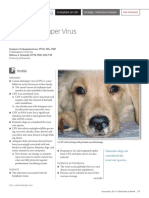 Canine Distemper Virus