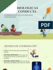 Bases Biologicas de La Conducta 2
