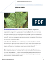 Aphids Information Details on Plants _ AsiaFarming