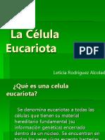 celula-eucariotica