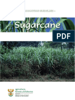 Sugar Cane Prodocution Guideline