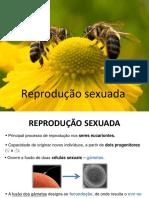 10-ReproduçãoSexuada (1)