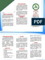 Brochur (Sistema Nervioso Central) 24 10 17