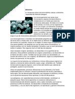 Microorganismos en Alimentos