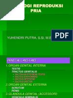 Fisiologi Pria