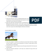 CHARACTERISTICS OF WOLVES.docx