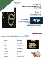 Tema 2 Helmintos Nemátodos 2 (1).2 Ascaris Lumbricoides