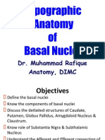 Topographic Anatomy of Basal Nuclei