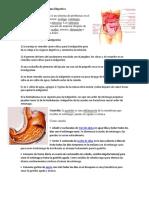 5 Enfermedades Del Sistema Digestivo