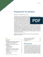 01 - Organización Del Quirófano