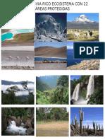 Tiene Bolivia Rico Ecosistema Con 22 Áreas Protegidas