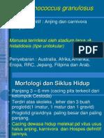 Cyclopilidea e Granulosus e Multilocularis Multiceps Multiceps
